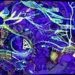 Parasit (UV)