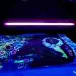 Traum (UV) ausgestellt